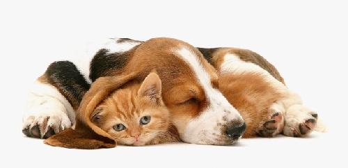 猫狗的故事;  让你爆笑的动物趣图 让你爆笑的动物趣图