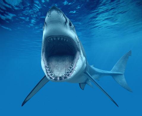 卡通动物鲨鱼眼睛