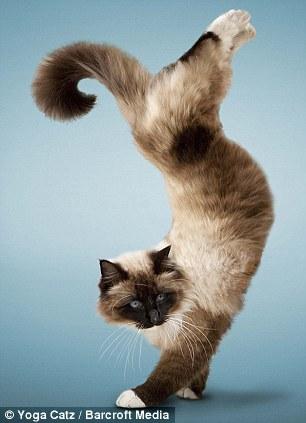 壁纸 动物 猫 猫咪 小猫 桌面 306_423 竖版 竖屏 手机