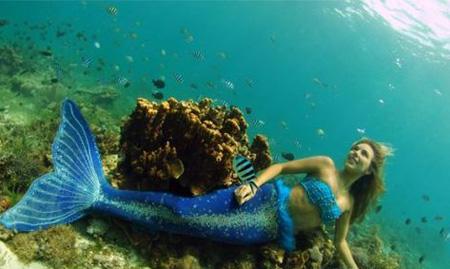 壁纸 海底 海底世界 海洋馆 水族馆 桌面 450_269