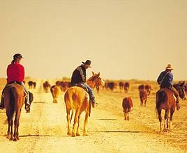 欢腾南澳赶牛节