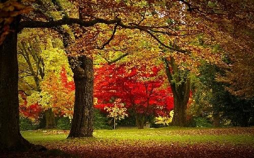 秋天边框主题墙布