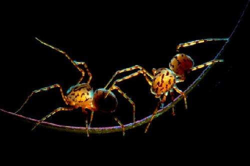 微距摄影作品中,那些蚂蚁
