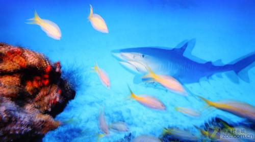 壁纸 动物 海底 海底世界 海洋馆 水族馆 鱼 鱼类 桌面 500_278