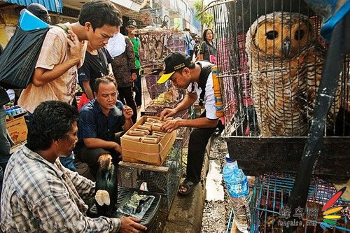 亚洲情色动物与人_动物之殇:揭秘亚洲野生动物贸易链-科技频道-和讯网