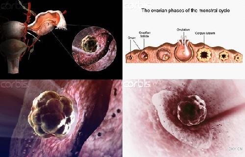 一个孩子的诞生:电子显微镜下的生命过程