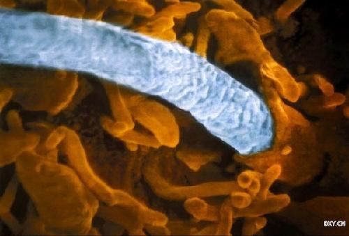 一个孩子的诞生:电子显微镜下的生命过程-新闻频道 ...