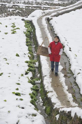 23日,在贵州玉屏侗族自治县新店乡,一名妇女从冰雪覆盖的田间小
