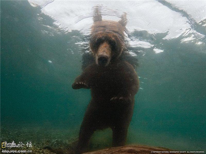 国家地理杂志摄影大型野生动物图集-科技频道-和讯网