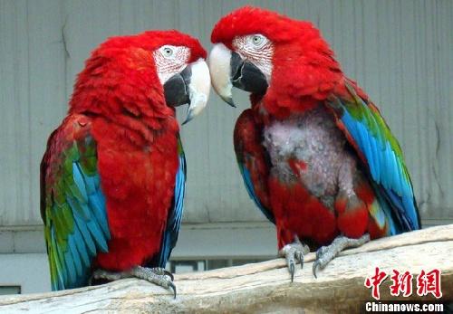 江苏苏州动物园内的鹦鹉在笼舍