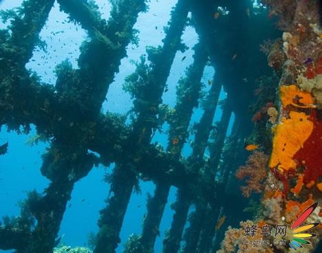 遗骸,沉船——神奇的海底世界