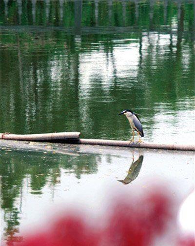 悠居上海郊区3000平私家花园