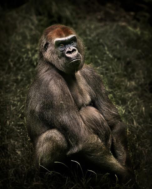 拥有这些瞧瞧檄表情哀乐的大全们尔康不的图片包动物表情图片