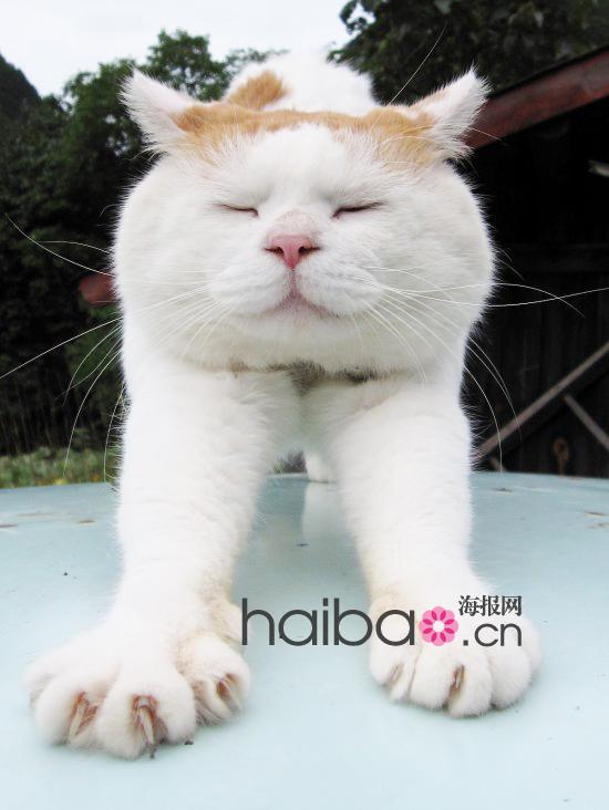猫咪眯眼可爱图片