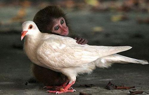 动物间的跨物种友情[组图]