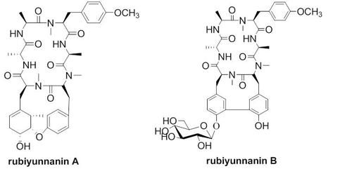 ins简笔画-昆明植物所在茜草科类型环肽研究中取得新突破