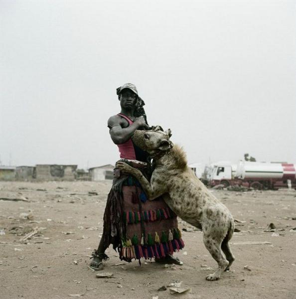 狒狒与鬣狗打斗