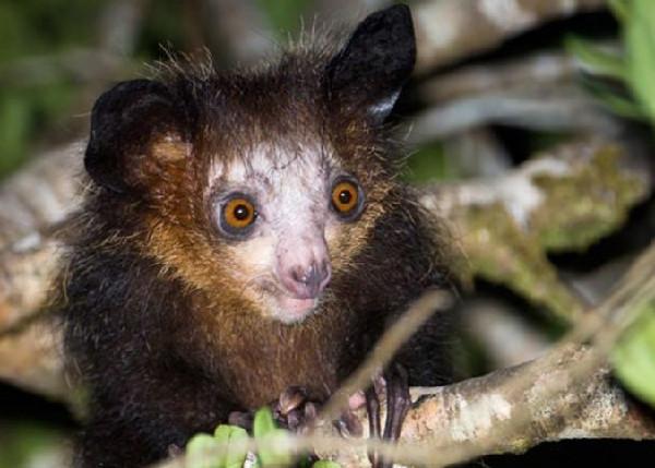 尽管马达加斯加岛上的国家公园数量不断增多,但自然保护主义者仍在