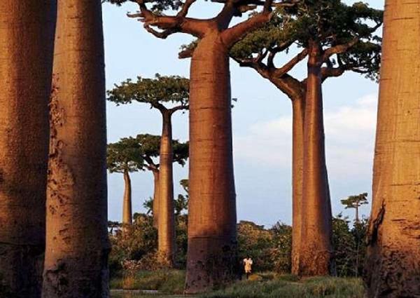 马达加斯加发现稀奇古怪物种