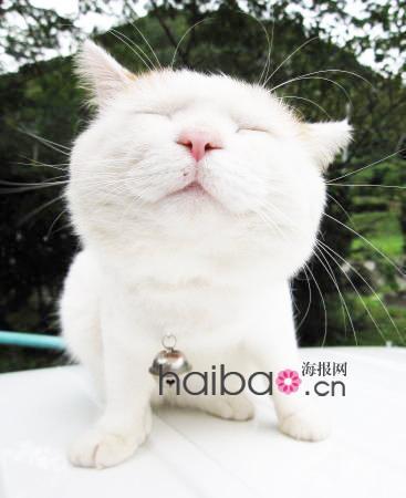 """日本明星宠物""""猫叔""""可爱私照一起赏:来看看叔家的兄弟姐妹是不是也一"""
