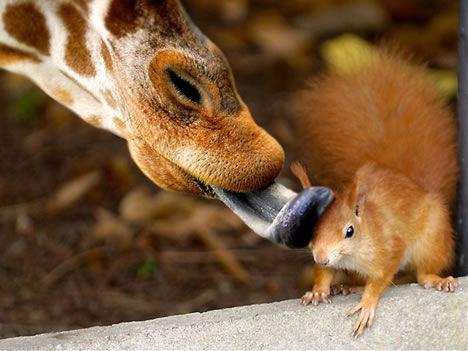 难得一见!动物间的情与爱