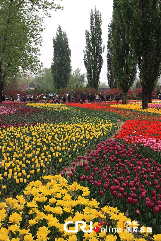 新闻 正文    北京植物园的观赏植物区由牡丹园,芍药园,月季园,海棠园