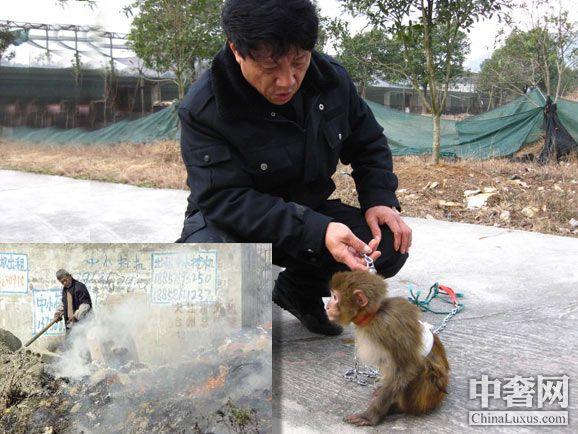 省重点保护陆生野生动物