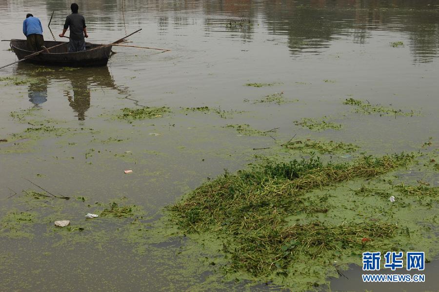 新闻 正文    6月19日,合肥南淝河入巢湖处水面上漂着厚厚的浮萍,在此