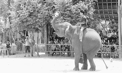 大象运木头图片