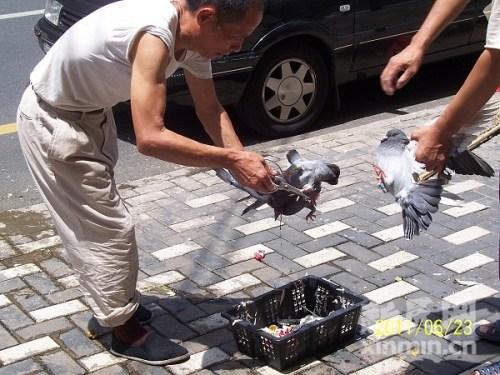 小贩当街活杀信鸽 汪鹤群摄