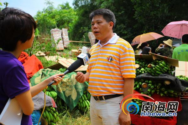 临高县南宝镇松梅村的香蕉大丰收却卖不出去,许多香蕉都丢在地上,或