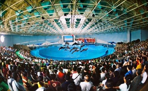 欣赏到更精彩的海洋动物表演