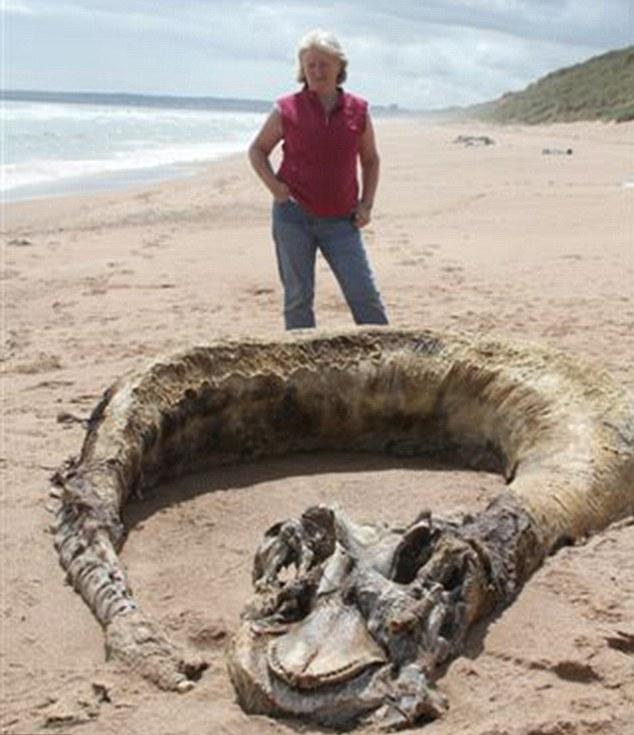 苏格兰夫妇发现罕见动物尸体