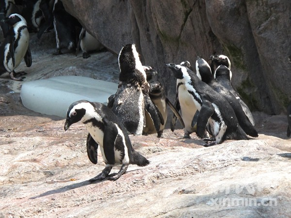 上海动物园回传